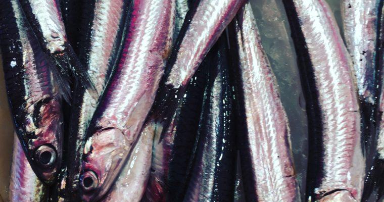 Chioggia: il mercato del pesce e uno strano ristorante